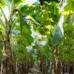 New Agribusiness Opportunities for Economic Growth Post COVID-19 Pandemic