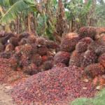 Nigerian Agribusiness: The Export Potentials