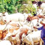 There is no federal grazing law, Buhari should avoid tension – Basiru, Senate spokesman